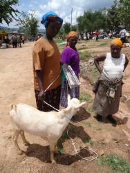 Markt omgeving Mithini Ithanga, Kenia