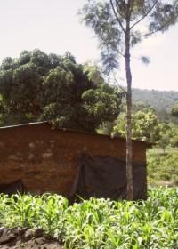 De maisvelden bij Catherine, Baringo, Donyo Sabuk, Kenia