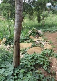 De matrassen waar de kinderen van Josephine op slapen, Uamani