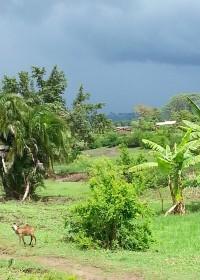 Donkere luchten pakken zich samen, Kitambaasye, Kenya, regentijd.