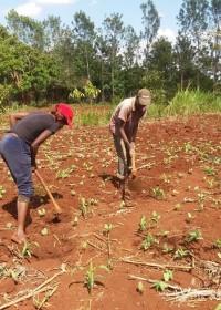 Circle4life, Kenia, zaden en kunstmest, onkruid wieden, betrokkenheid, coronatijd